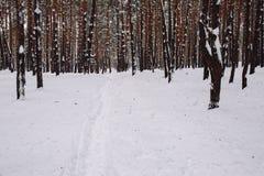 Sposób w śnieżystym lesie Fotografia Royalty Free