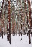Sposób w śnieżystym lesie Obrazy Royalty Free