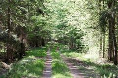 Sposób w Bialowieza parku narodowym w Polska zdjęcia royalty free