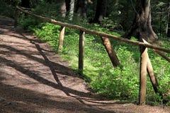 Sposób w lesie Fotografia Stock