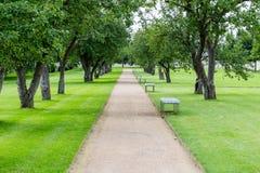 Sposób w parku z drzewem obraz stock