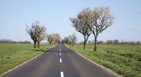 sposób wiosna drzewa sposób Zdjęcie Royalty Free