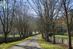 Sposób z drzewami 4 obrazy royalty free