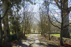 Sposób z drzewami 5 obrazy royalty free
