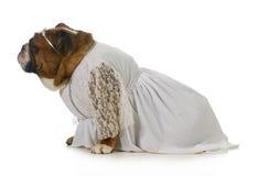 Sposa del cane Fotografie Stock