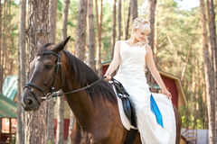 Sposa e cavallo Fotografia Stock