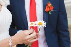 Sposa e sposo che tengono gli anelli sulla camomilla Fotografia Stock