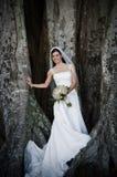 Sposa sotto l'albero Immagini Stock Libere da Diritti
