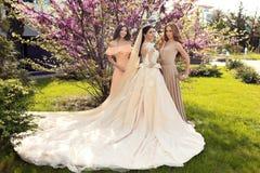 Sposa splendida in vestito da sposa lussuoso, posante con le belle damigelle d'onore in vestiti eleganti Fotografie Stock