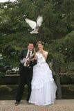 Sposato appena immagine stock libera da diritti