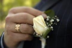 Sposo che organizza boutonniere di rosa Fotografie Stock Libere da Diritti