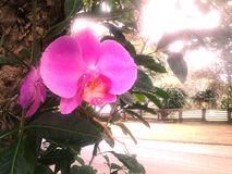 Sposti l'orchidea Fotografia Stock Libera da Diritti