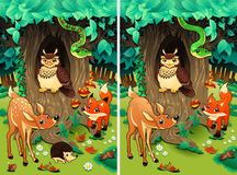Spot the differences. Royalty Free Stock Photo
