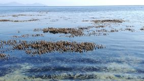 Spot focusing on Corals appearing over the surface of sea during low tide with horizon stock image