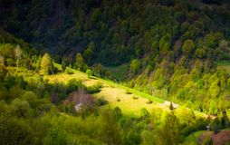 Spot of light on forested hillside. Lovely nature background in springtime Royalty Free Stock Photo