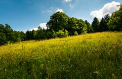 Spot of light on a meadow among forest. Gorgeous nature scenery in summer. picturesque view stock photo