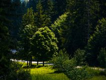Spot of light on some trees in forest. Beautiful summer nature scenery of TransCarpathia Royalty Free Stock Images