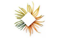 Spot omhoog met creatieve bloemenregeling die van spargradiënt wordt gemaakt Royalty-vrije Stock Foto's