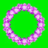 Spot op rond bloemenkader van bloemen van wilde die geranium op groene achtergrond wordt geïsoleerd Royalty-vrije Stock Fotografie