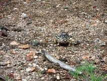 Spot reptilen Royaltyfria Bilder