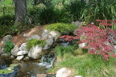 A Restful Shaded Pond Royalty Free Stock Photo