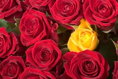 Spot the yellow one. One yellow rose in a bouquet of red roses Stock Images