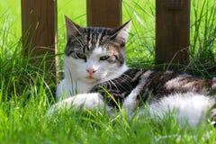 spoted katt Royaltyfri Fotografi