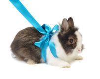 Spoted rabbit with blue bow Stock Images