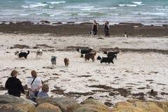 Spotkanie Border collie właściciele na australijczyk plaży i psy, wietrzny dzień zdjęcia royalty free