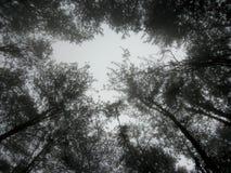 Spotkanie drzewami zdjęcia stock