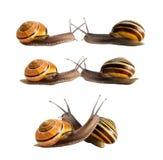 Spotkanie dwa ślimaczka Obrazy Stock