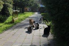 spotkanie koty Obraz Royalty Free