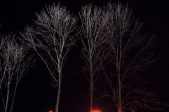 Spotlighted bald branches in winter at a black background Stock Photos