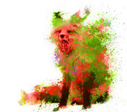 Spots fox in red and green Royalty Free Stock Photos