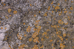 Spots of yellow moss on old stone Royalty Free Stock Images