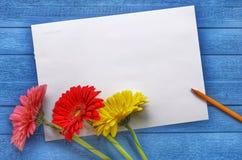 Spott herauf Grafik für Feier, Zeichnung und Text auf einem blauen hölzernen Hintergrund mit drei farbigen Blumen Gerberas flach lizenzfreies stockbild