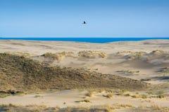 spottar det curonian havet för den baltiska kusten Arkivbilder