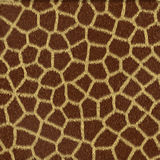 Spotted animal texture giraffe Stock Photos