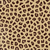 Spotted animal texture leopard Royalty Free Stock Photo