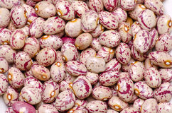 Spotted beans Royalty Free Stock Images