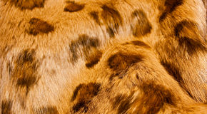 Spotted brown fur Royalty Free Stock Images
