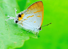 Spotted butterfly. Stary on green leaf stock photo