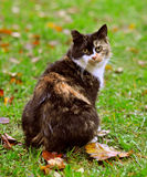 Spotted cat, autumn Royalty Free Stock Photos