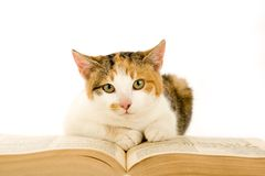 Spotted cat and book, isolated. On white Stock Photo