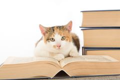 Spotted cat and book, isolated. On white Royalty Free Stock Image
