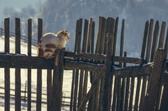 Spotted cat on fence Stock Photography