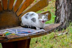 Spotted cat reading a newspaper on the bench royalty free stock photography
