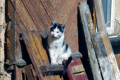 Spotted cat sits on a wooden board near the wall of the house Royalty Free Stock Images