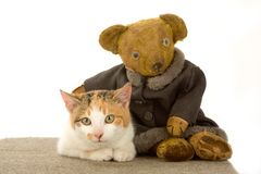 Spotted cat and an teddy bear, isolated Royalty Free Stock Photos