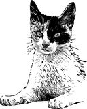 Spotted cat Royalty Free Stock Photography